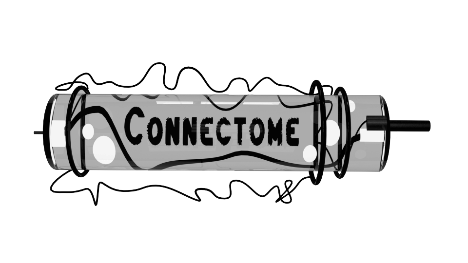 Connectome_Kaharlyk